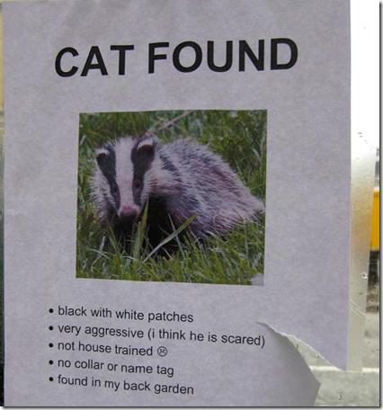 cat-found